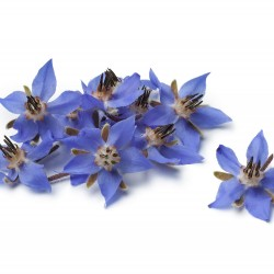 BORAGE OIL, REFINED