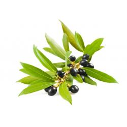 LAUREL BERRY ESSENTIAL OIL