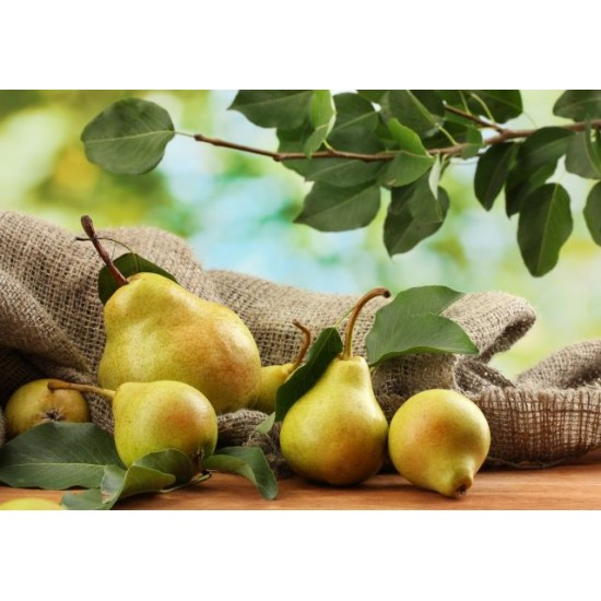 WILLIAMS PEAR FRAGRANCE OIL